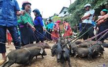 Lợn cắp nách mang xuống chợ, cột dây và tập trung thành một khu để bán. Ảnh: Hachi8