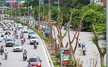 Chỉ sau một năm thực hiện chương trình trồng mới một triệu cây xanh, hàng trăm nghìn cây xanh đã được trồng tại nhiều đường,phố. Ảnh: Ngọc Thành