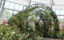 Vườn hồng rực rỡ với hàng trăm loài hoa