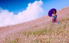 Hà Giang mùa hoa tam giác mạch mê hoặc nhiều du khách
