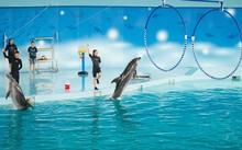 Biểu diễn cá heo ở Baara Land (Quốc Oai)