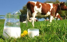 Không nên thay thế hoàn toàn sữa bò bằng sữa đậu nành cho trẻ