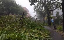 Bão số 12 khiến cây cối gãy đổ ở Nha Trang (Ảnh PL HCM)