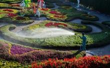 Vườn hoa nhiều màu sắc ở Bà Nà Hills