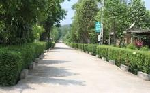 Hàng rào xanh ở cụm dân cư Hương Trà- Hương Khê (Hà Tĩnh) –   điểm sáng về việc tạo cảnh quan xanh – sạch – đẹp. (Ảnh: T.L.).