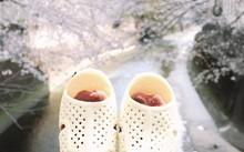 Dép tổ ong ở Nhật Bản mùa hoa anh đào nở