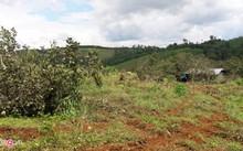 Kỷ luật nhiều người vụ cấp đất rừng cho nguyên thường vụ tỉnh uỷ