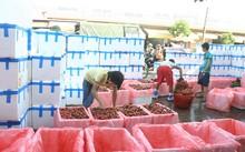 Thu mua vải thiều tại Lục Ngạn Photo: Nguyễn Trường
