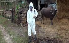 Phun thuốc khử trùng tại vùng dịch lở mồm long móng.