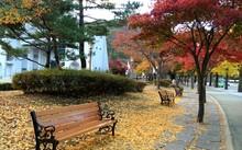 Hàn Quốc là điểm đến thu hút nhiều khách Việt dịp mùa thu.