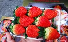 Trái đồng đều, màu sắp đẹp mắt lại có vị ngọt đậm đà nên dâu tây Hàn về Việt Nam được ưa chuộng.
