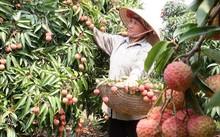 Trái cây Việt 'một đổi một' với trái cây Mỹ