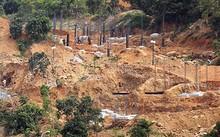 Cận cảnh góc rừng bị tàn phá.