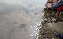Cá chết ở khu vực xuất hiện dải nước màu vàng.