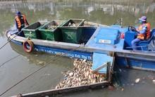 Lực lượng môi trường đô thị vớt xác cá sáng 4/4.