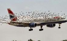 Các nhà khoa học nội sẽ sản xuất 'máy đuổi chim' ở sân bay