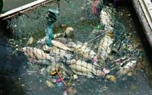 Sau vài cơn mưa trái mùa đầu tháng 4, cá lại chết hàng loạt trên kênh Nhiêu Lộc - Thị Nghè.