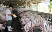 Giá lợn hơi thấp kỷ lục: Hà Nội thiệt hại 1.500 tỷ đồng