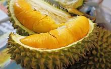 Quả sầu riêng không những bổ dưỡng mà còn là vị thuốc giúp lứa đôi thêm mặn nồng.