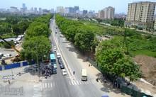 Hàng cây xà cừ trên đường Phạm Văn Đồng sắp bị chặt hạ, di dời để làm công trình giao thông