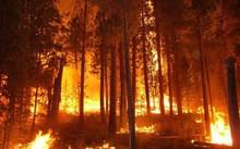 Rừng phòng hộ ở Sóc Sơn cháy suốt 8 giờ