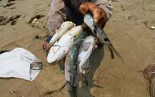 Hoàn tất bồi thường thiệt hại sự cố môi trường biển trong tháng 6