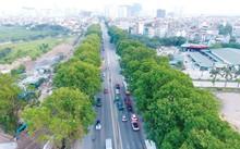 Kinh phí dịch chuyển hơn 1.200 cây xà cừ cổ thụ trên đường Phạm Văn Đồng sẽ được dành để trồng mới 20.000 cây xanh mới có đường kính 25 - 30cm.