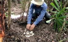Tổ chức bảo tồn Wildlife Conservation phát hiện ổ 19 trứng cá sấu xiêm tưởng đã tuyệt chủng ở gần Koh Kong, Campuchia - Ảnh: AFP