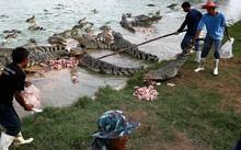 Thịt cá sấu 'cháy hàng' ở Thái Lan