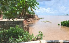 Đoạn sạt lở có tổng chiều dài gần 100m, ăn sâu vào đất liền 15m.