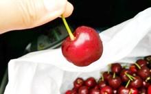 Cherry Úc chính thức được vào Việt Nam