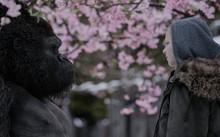 Fox muốn War for the Planet of the Apes giành được nhiều đề cử Oscar hơn so với hai tập trước của loạt phim tái khởi động thương hiệu Hành tinh khỉ. Ảnh: Fox.
