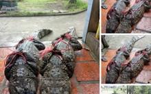 Hình ảnh đăng tải trên Facebook Thanh Toan, nay đã được gỡ bỏ.
