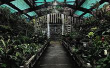 Nơi chuyên trồng và trưng bày các loại lan quý hiếm ở Thảo Cầm Viên