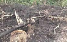 Hơn 60 ha rừng bị chuyển đổi không đúng mục đích ở huyện Quỳ Hợp.