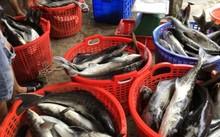 Cá chết bất thường khiến người dân lo lắng.