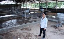 Nước lũ dâng cao, cuốn trôi đàn heo hơn 300 con của bà Phan Thị Hường. Sau 1 đêm, tất cả giờ chỉ là những chuồng trống.