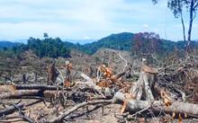 Hơn 60ha rừng bị tàn phá ở huyện An Lão, tỉnh Bình Đinh