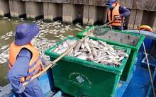 Lực lượng chức năng tổ chức vớt cá chết trên kênh Nhiêu Lộc - Thị Nghè vào tháng 5-2016.