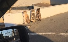 Phản ứng siêu đáng yêu của 3 chú mèo khi bị bắt quả tang