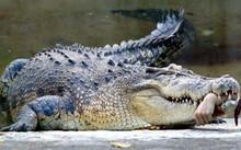 Kinh hoàng, phát hiện nhiều phần thi thể người trong bụng cá sấu