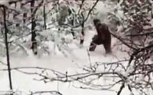 """Các nhà khoa học Nga tình cờ bắt gặp """"người tuyết Yeti"""" trong rừng"""