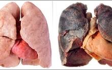 """Hành trình thuốc lá """"phá hoại"""" cơ thể"""