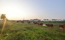 Dự án khu sinh thái Cẩm Đình - Hiệp Thuận (huyện Phúc Thọ, Hà Nội) được UBND tỉnh Hà Tây (cũ) phê duyệt từ năm 2007 trên diện tích 47 ha, cung cấp đủ nhu cầu nhà ở cho gần 10.000 người. Tháng 6/2008, khi sáp nhập về Hà Nội, quy mô của dự án được điều chỉn