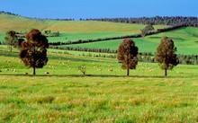 Nhiều nhà đầu tư Việt đang rất quan tâm tới bất động sản nông nghiệp ở Australia.