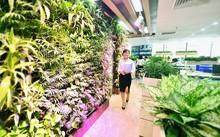 Văn phòng xanh đáng mơ ước của dân công sở
