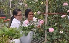 Điểm thu hút và say lòng nhất đối với du khách là hơn 300 loại hoa hồng các loại khoe sắc
