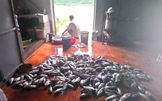 20 tấn cá chết của một hợp tác xã thuộc huyện Kỳ Sơn (Hòa Bình).