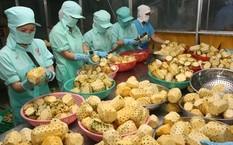 Xuất khẩu rau quả tiếp tục tăng trưởng ấn tượng trong 5 tháng đầu năm 2017