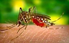 Hàng ngàn ca sốt xuất huyết ở Tây Nam Bộ